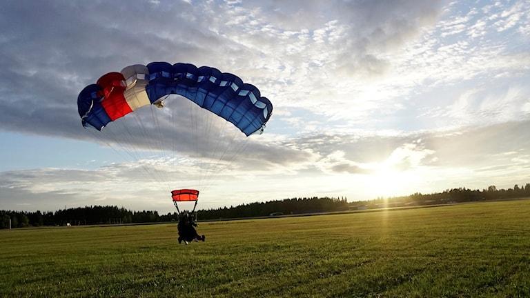 Fallskärmshoppare går in för landning på gräsfält i solnedgången