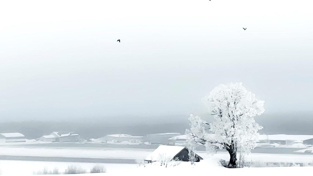 Ett dimmigt och snöigt landskap.