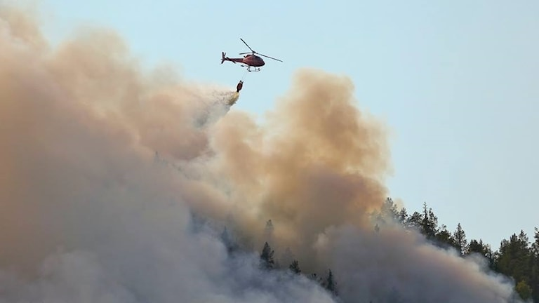 Skogsbranden i Pålgård