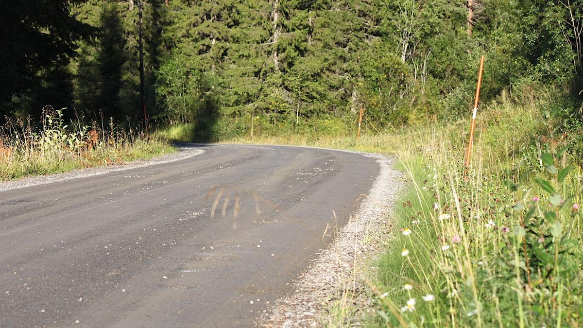 Grusväg genom skog i Jämtland