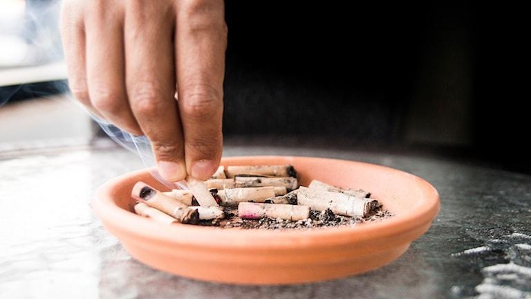 Askkopp, fimpar, ciggaretter, rökfri, storrökare