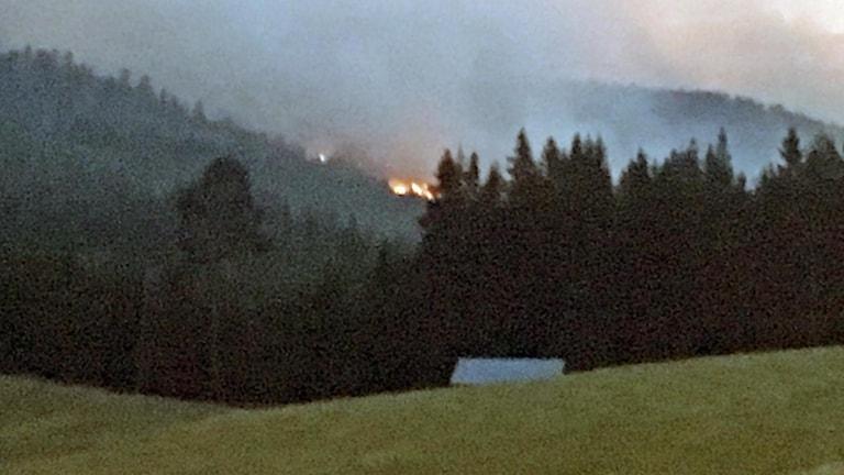 Skogsbranden i trakten av Pålgård, Ragunda kommun, tidigt på morgonen. 180716. Foto: Ingrid Engstedt Edfast/SR