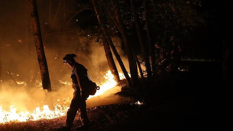Bild från brandbekämpningen i Calistoga, Kalifornien, USA.