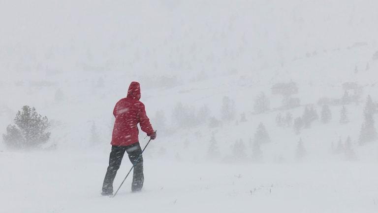 Snöoväder. Fjällen. Storm. sdltae11072-nh