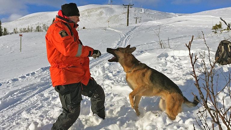 Jörgen Modin hundförare och områdesansvarig för hundverksamheten med polisen i Jämtland.Hund ,polis, snö, fjäll, lavinövning