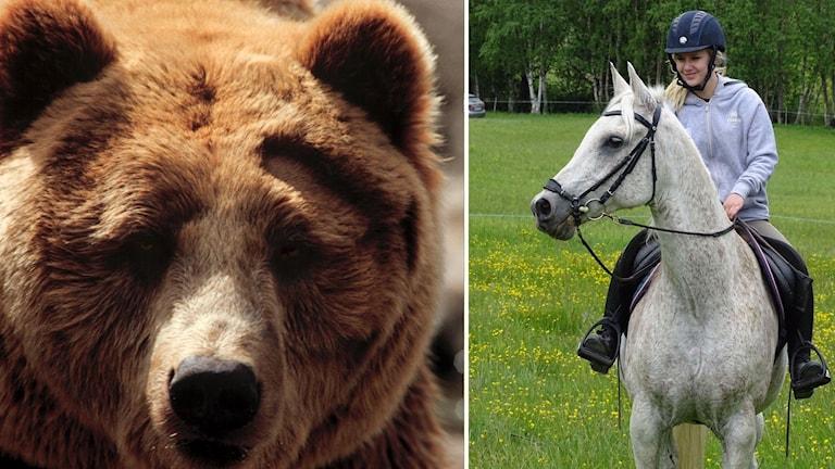 Brunbjörn Jhenny Larsson björn