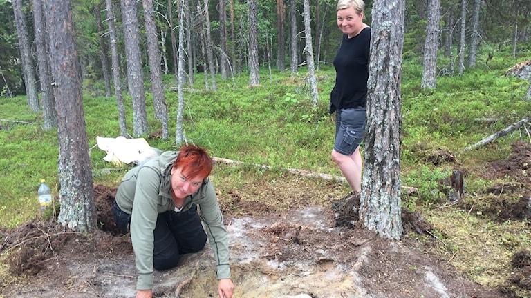 Två kvinnor gräver i skogen.