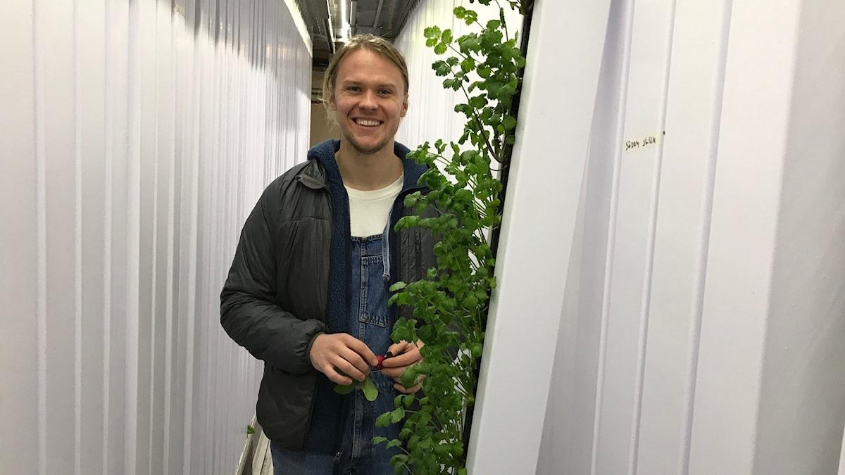 Man står med grön grönsak i container