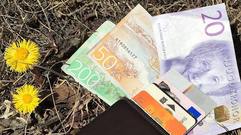 Plånbok med kort och kontanter tillsammans med tussilago
