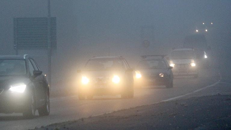 Bilar kör på väg i dimma