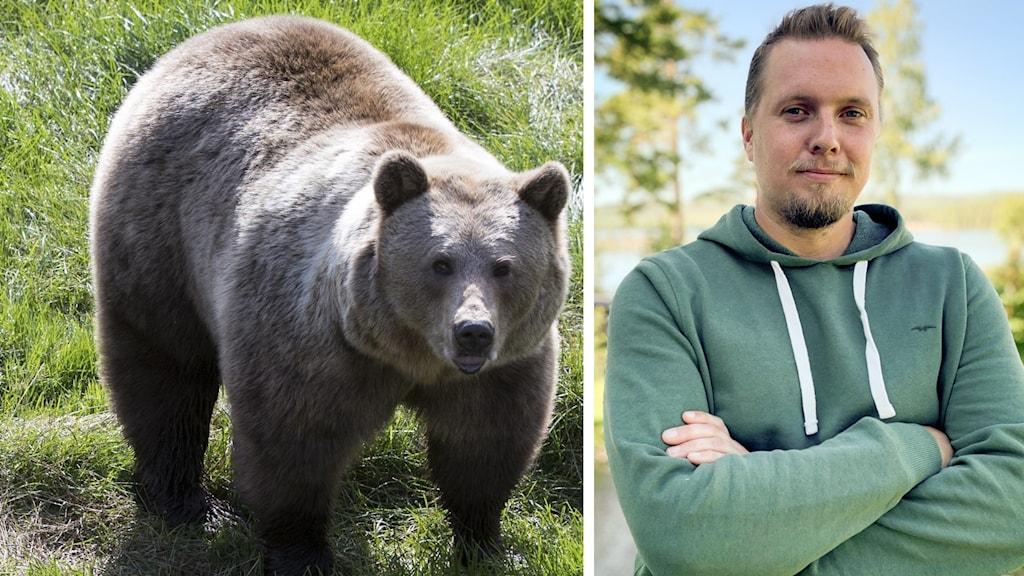 Splitbild. Brunbjörn till vänster porträtt på man utomhus till höger.