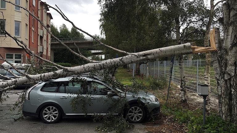 Angelica Niklasson, fick en stormfälld björk över sin bil. Fältjägargränd. 160827. Foto: Filip Kruse/SR