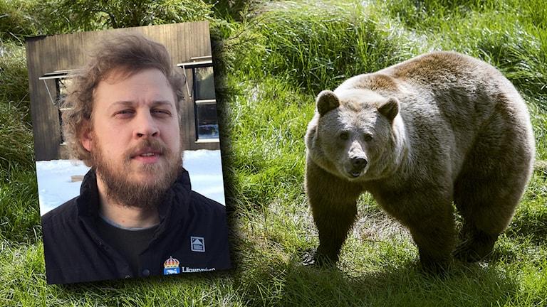 Rovdjursexperten Johan Nyqvist berättar om björnens vissling.