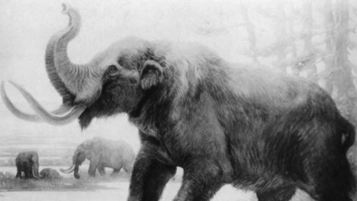 Mammut.