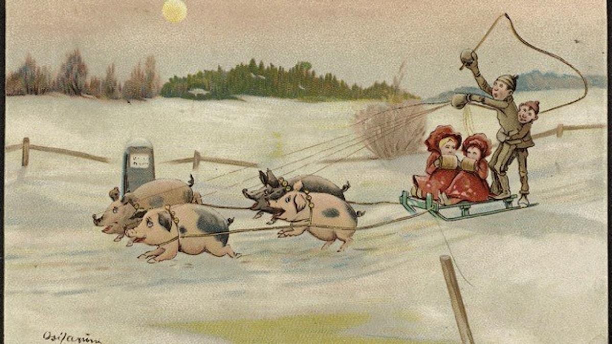 Julkort med släde och grisar av Oscar Lærum (1868-1923). Nasjonalbiblioteket, Norge