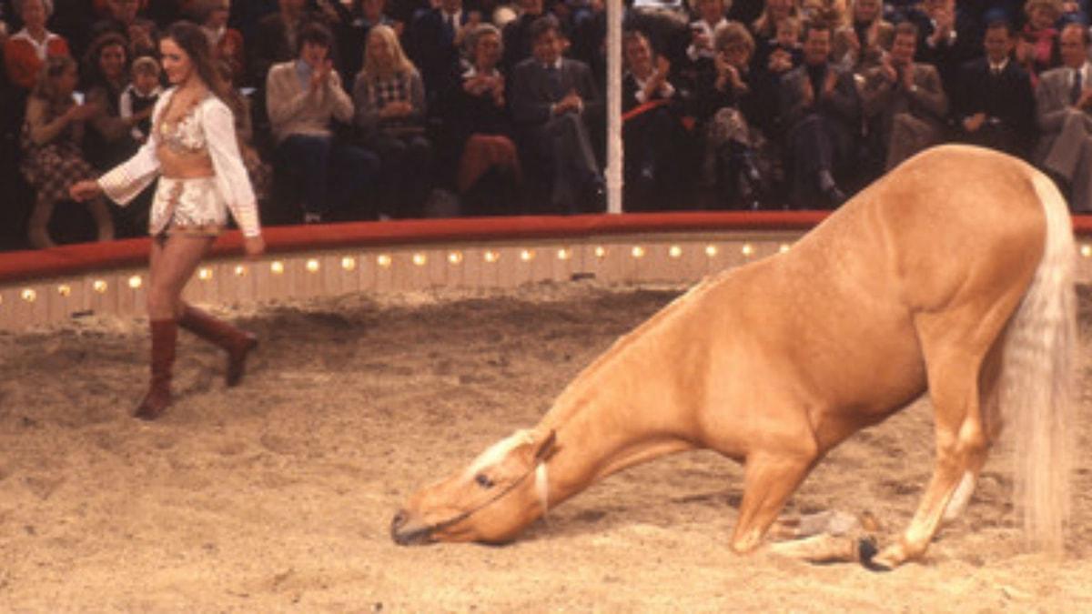 Bör djur få utökade rättigheter?
