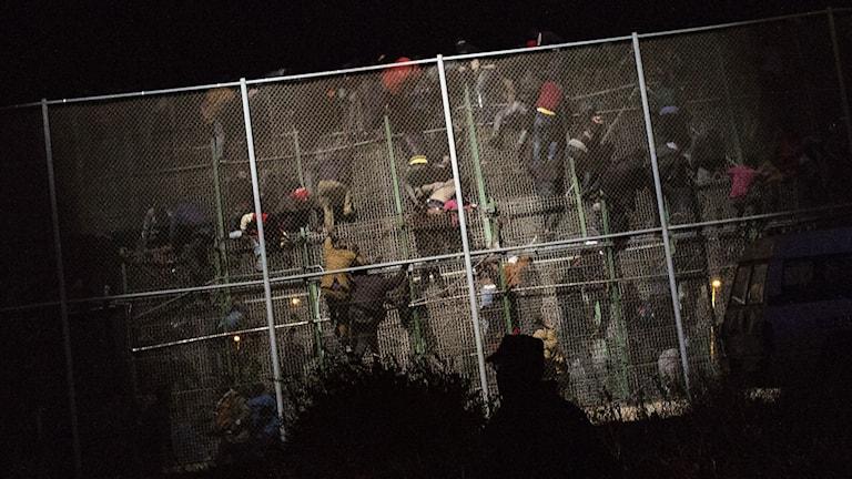 Arkivbild. Migranter har vid flera tidigare tillfällen försökt ta sig över det höga stängslet.