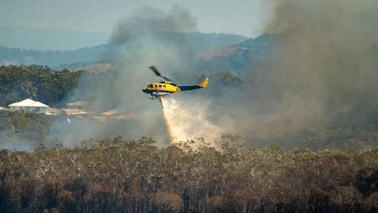 En helikopter bekämpar skogsbränderna i Queensland i Australien. Arkivbild.