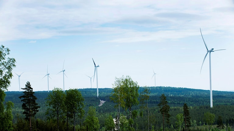 Vindkraftverk i en skog.