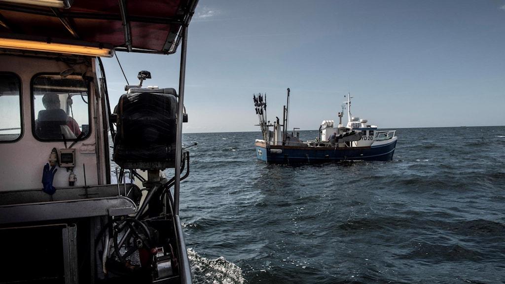 Fiskebåtar ute i arbete. Foto: Malin Hoelstad/SvD/TT.