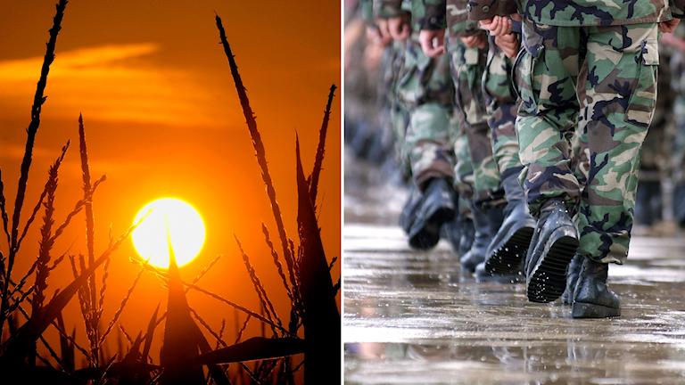 Delad bild: Sol som lyser på torkade majsplantor, soldater som marscherar.