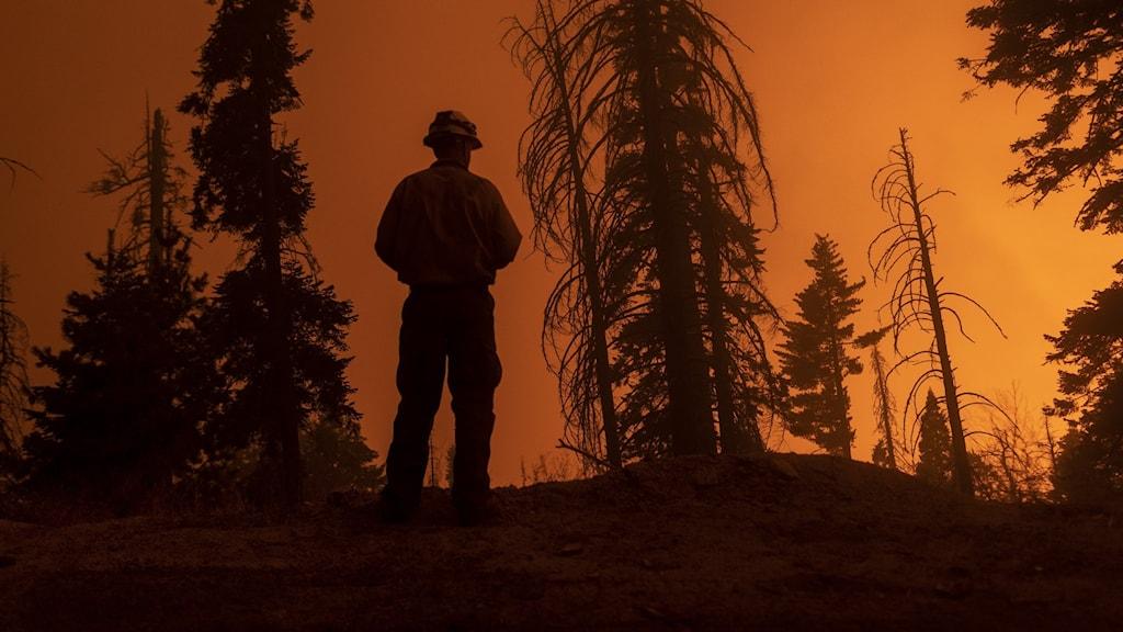 Brandman i skogen mot en orangefärgad himmel.