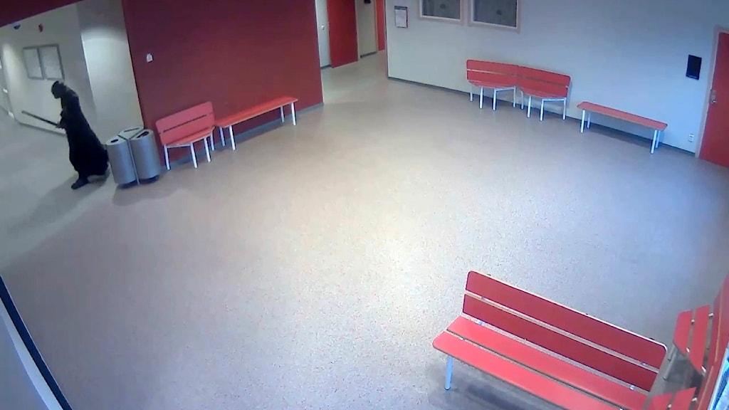 Bild ur övervakningsfilm från skolattacken i Trollhättan.