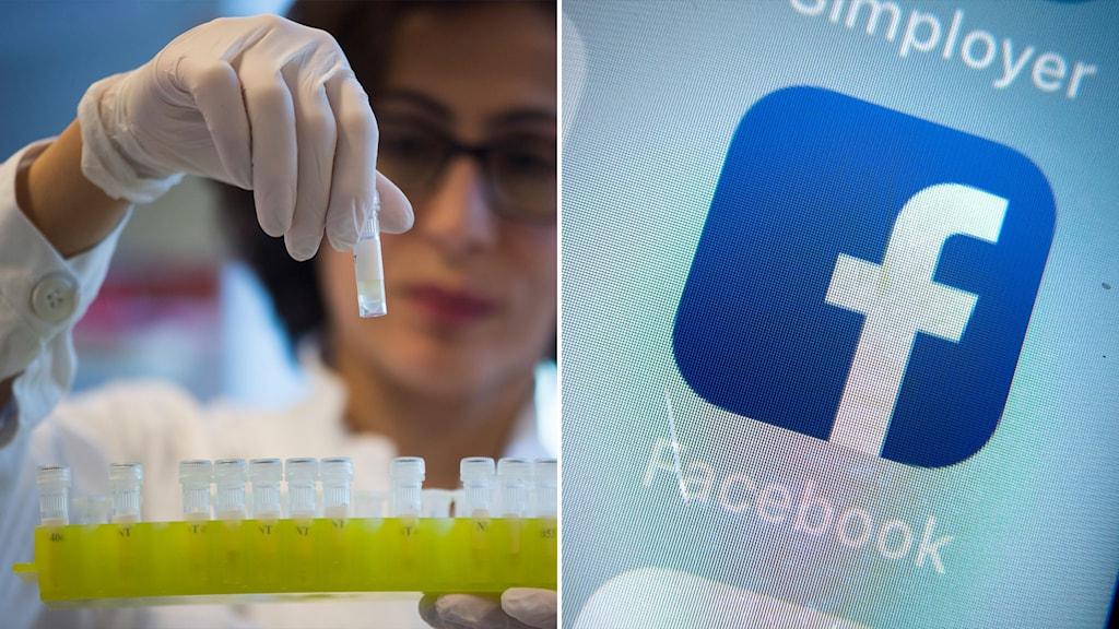 Till vänster: provrör med DNA från influensavirus i smittskyddslabbet på Folkhälsomyndigheten i Stockholm. Till höger: Facebooks logotyp.