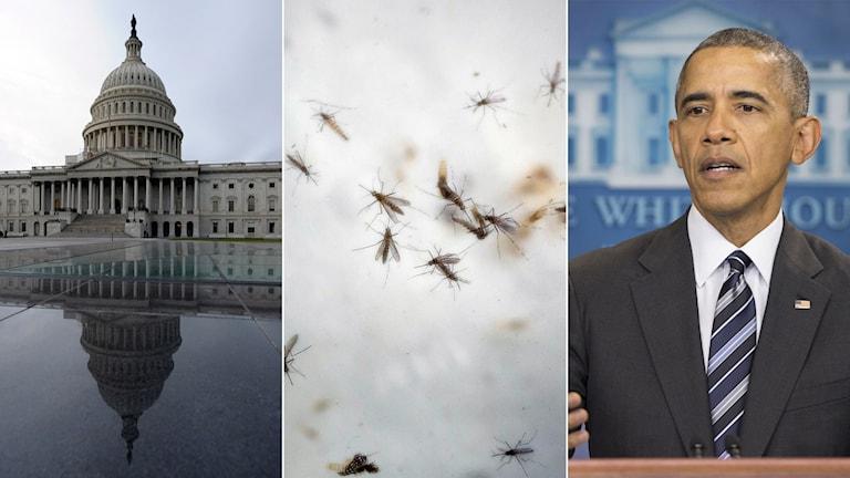 Tredelad bild: Kongressen, zikamyggor och Obama