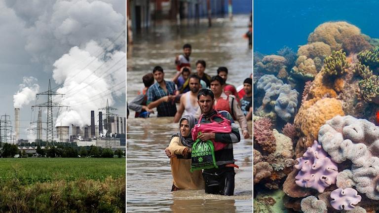 Tredelad bild: Kolkraftverk, människor som vadar på en översvämmad gata, koraller