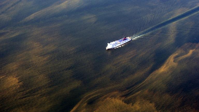 Algblomning Östersjön