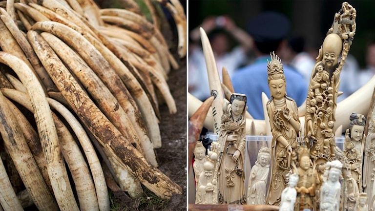 Delad bild: Elefantbetar och skulpturer av elfenben.