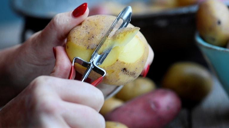 Närbild på händer som skalar potatis.
