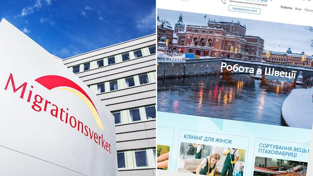 """Delad bild: Skylt där det står Migrationsverket, hemsida på ukrainska med texten """"Arbeta i Sverige""""."""