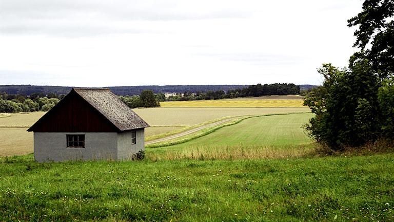 Jordbrukslandskap i Härnevik i Uppland. Foto: Hasse Holmberg / Scanpix.