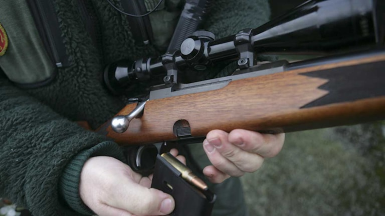 En jägare laddar sitt gevär. Foto: Fredrik Sandberg/Scanpix.