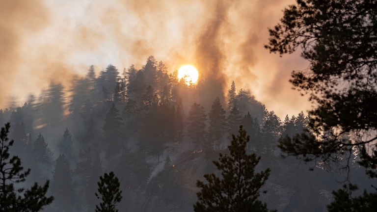 Skogbrand