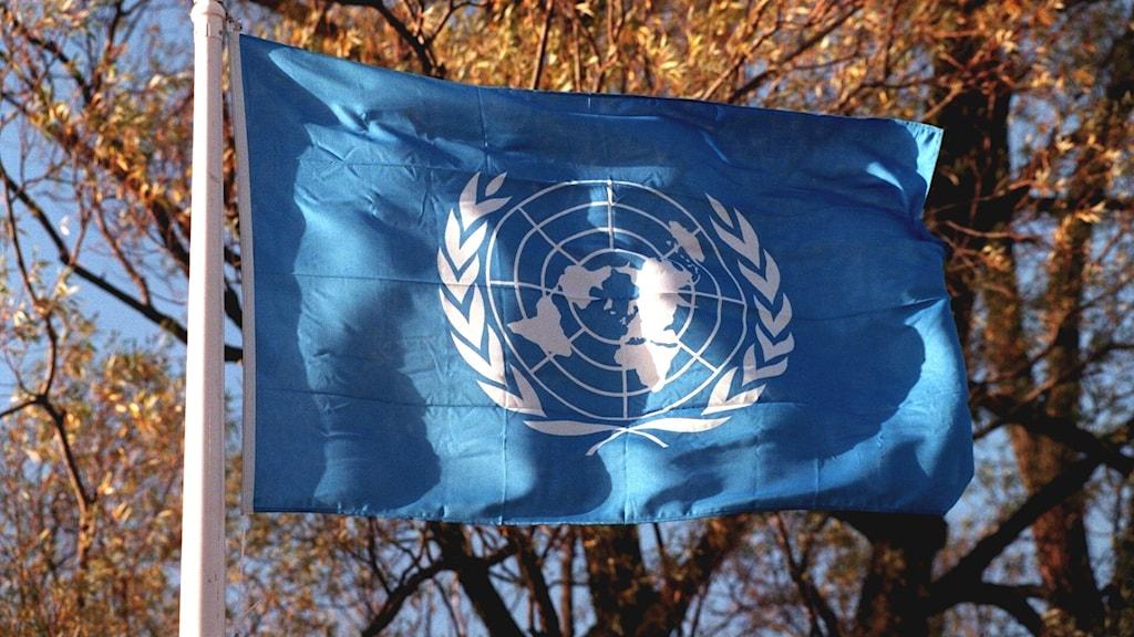 FN:s flagga. Foto Janerik Henriksson/TT.