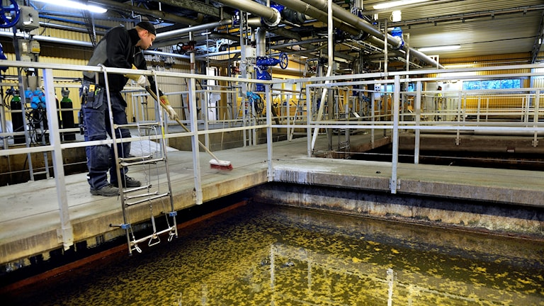 Reningsverk i Bålsta. Man står intill en vattenfylld bassäng.