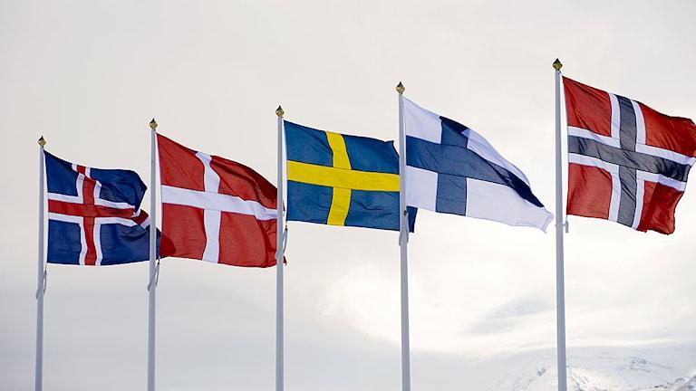 De nordiska ländernas flaggor. Foto: Henrik Montgomery/Scanpix