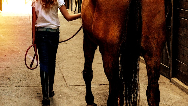 Flicka leder häst i stall.