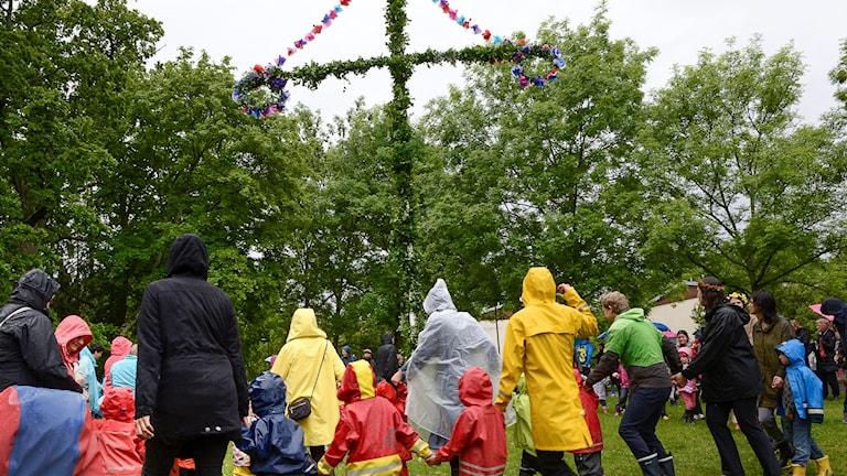 Blöt midsommar. Foto: Jonas Ekströmer/TT.