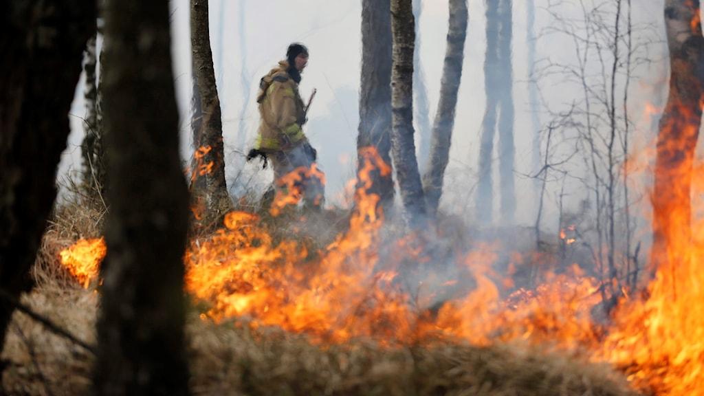 en brandman bekämpar en skogsbrand.