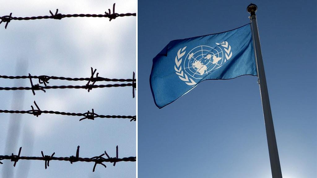 Fångar torterades i Ukraina