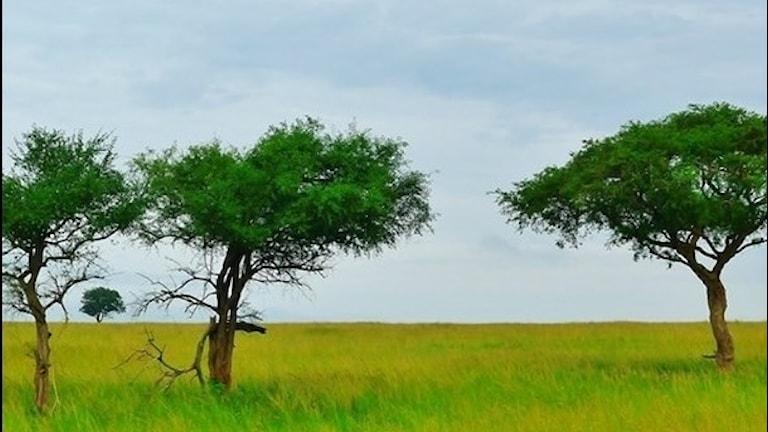 När blev öknen savann? Foto: TT.