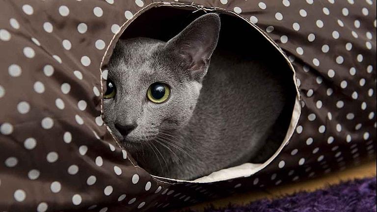 En katt tittar fram. Bilden har inget med artikeln att göra. Arkivfoto:TT.
