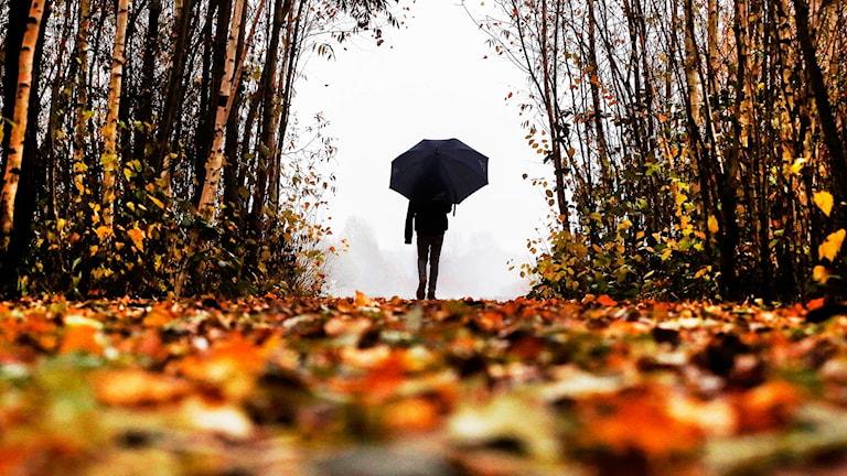Man går med paraply i löv en grå höstdag.
