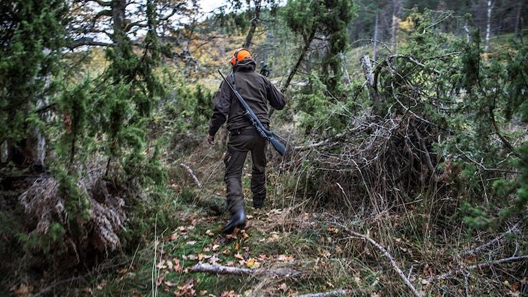 En jägare i skogen under en älgjakt på Gålö