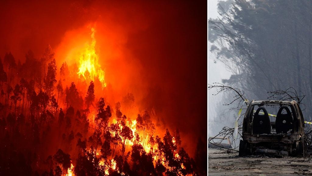 Skogsbrand i Portugal och utbränd bil