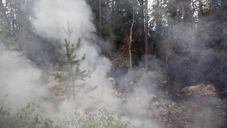Pyrande rök vid skogsbrand i Ljusdals kommun, i närheten av Ängra och Huskölen